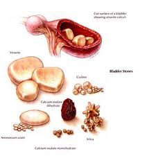 What Causes Bladder Stones In Small Dogs