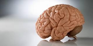 Central nervous system vascular malformations