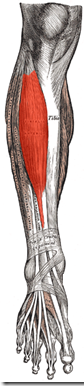 Chronic exertional compartment syndrome