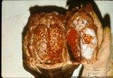 Eastern Equine Encephalitis