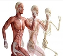 Ergonomic and Musculoskeletal Disorders