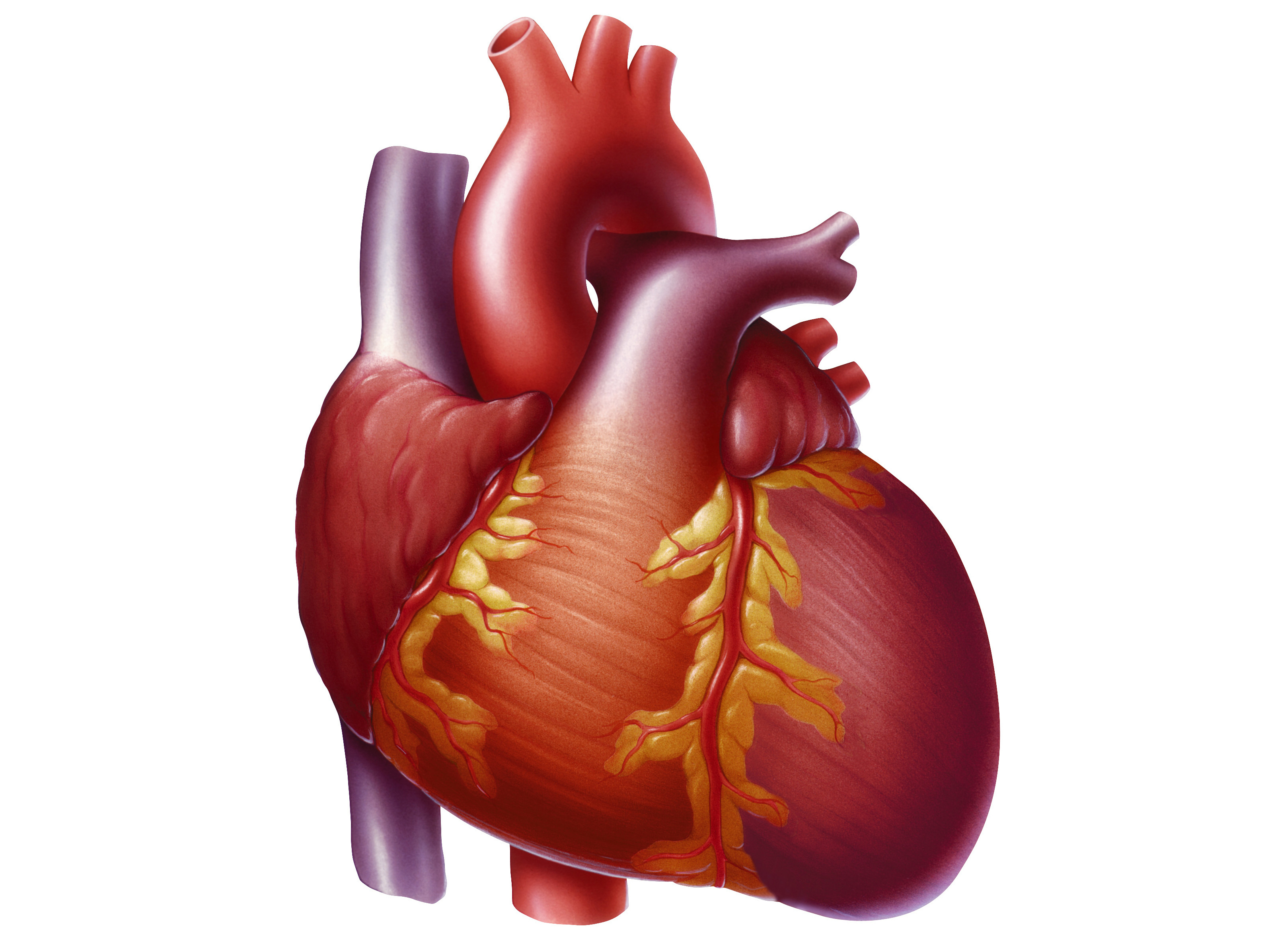 Heart disease | Norway| PDF | PPT| Case Reports | Symptoms | Treatment
