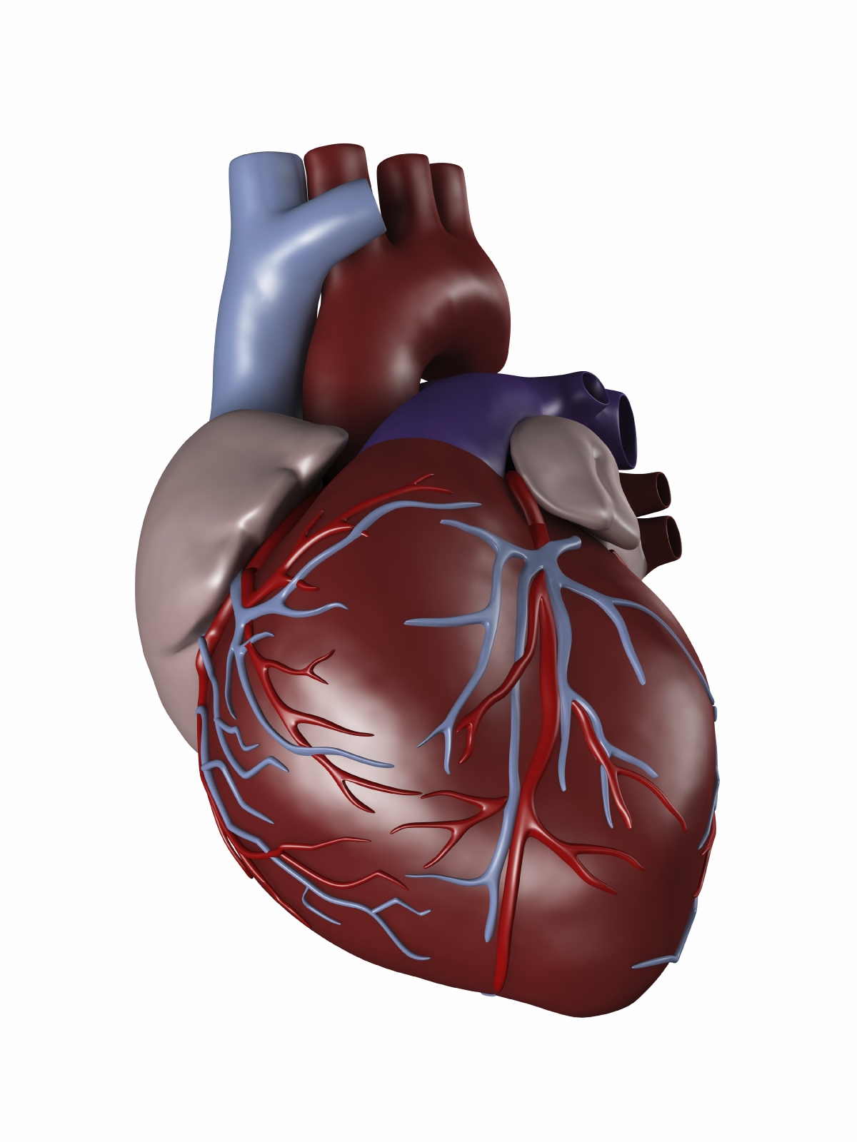Heart disease | France| PDF | PPT| Case Reports | Symptoms | Treatment