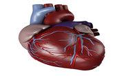 Heart murmurs