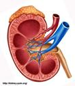 Kidney infection
