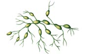 Lymphedema