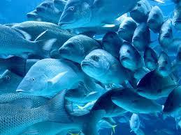 Marine Toxins