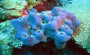 MRSA [Methicillin Resistant Staphylococcus aureus]