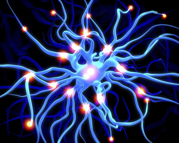 Paraneoplastic syndromes of the nervous system