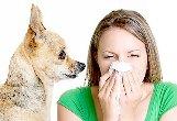 Pet Allergy