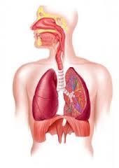 Pneumocystis pneumonia