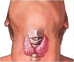 Thyroid nodules