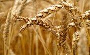 Wheat Allergy