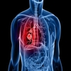 Biology of Respiratory System