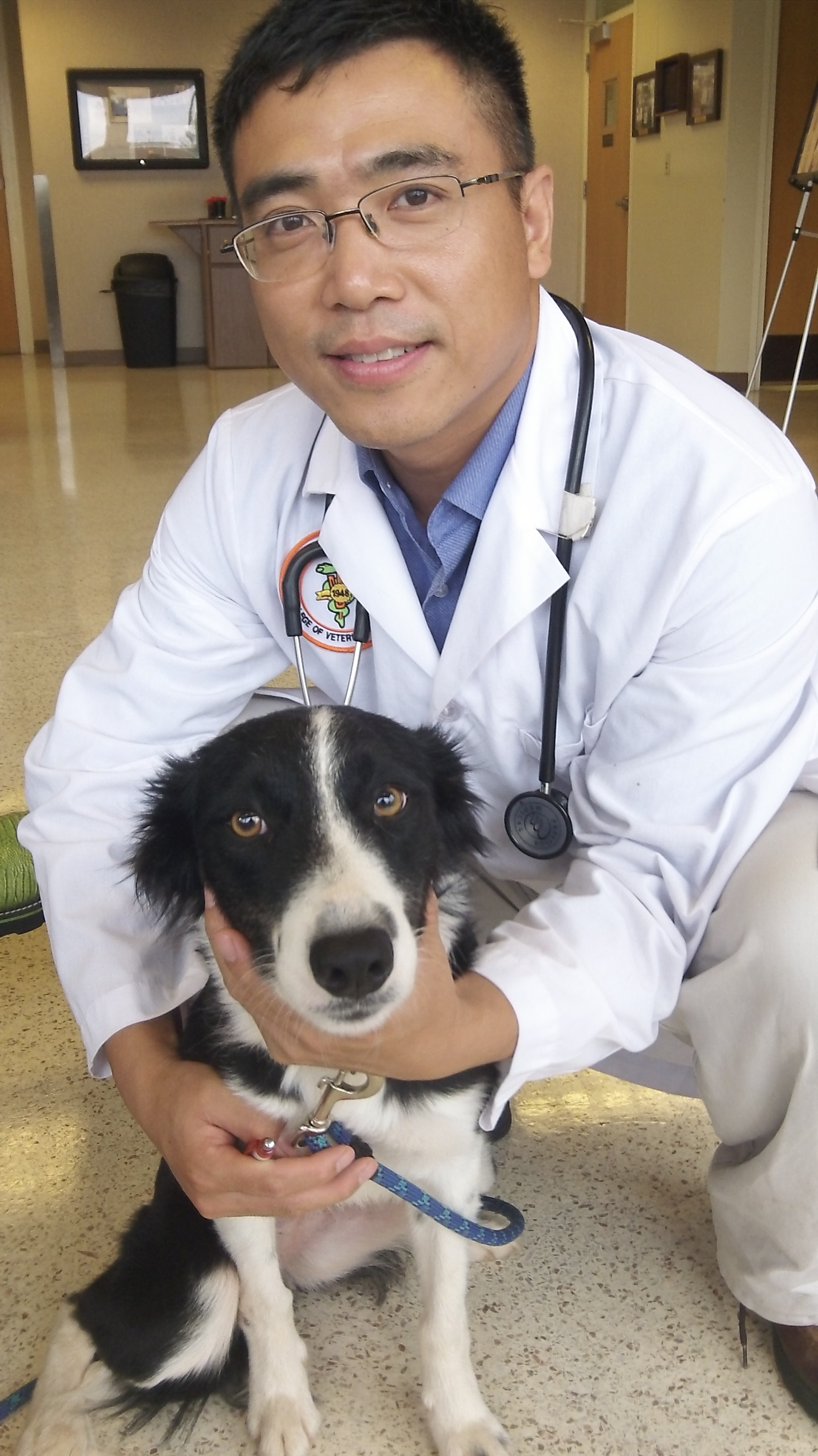 how to become a veterinary pathologist